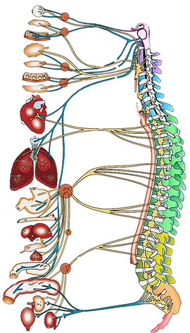 Spinal Flow 2.png