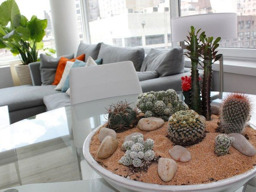 6 Easy Way To Grow Indoor Succulents that available at Kuching!