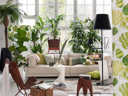 Let's make it Greener in 2021! 5 Houseplant ideal recommended for you!