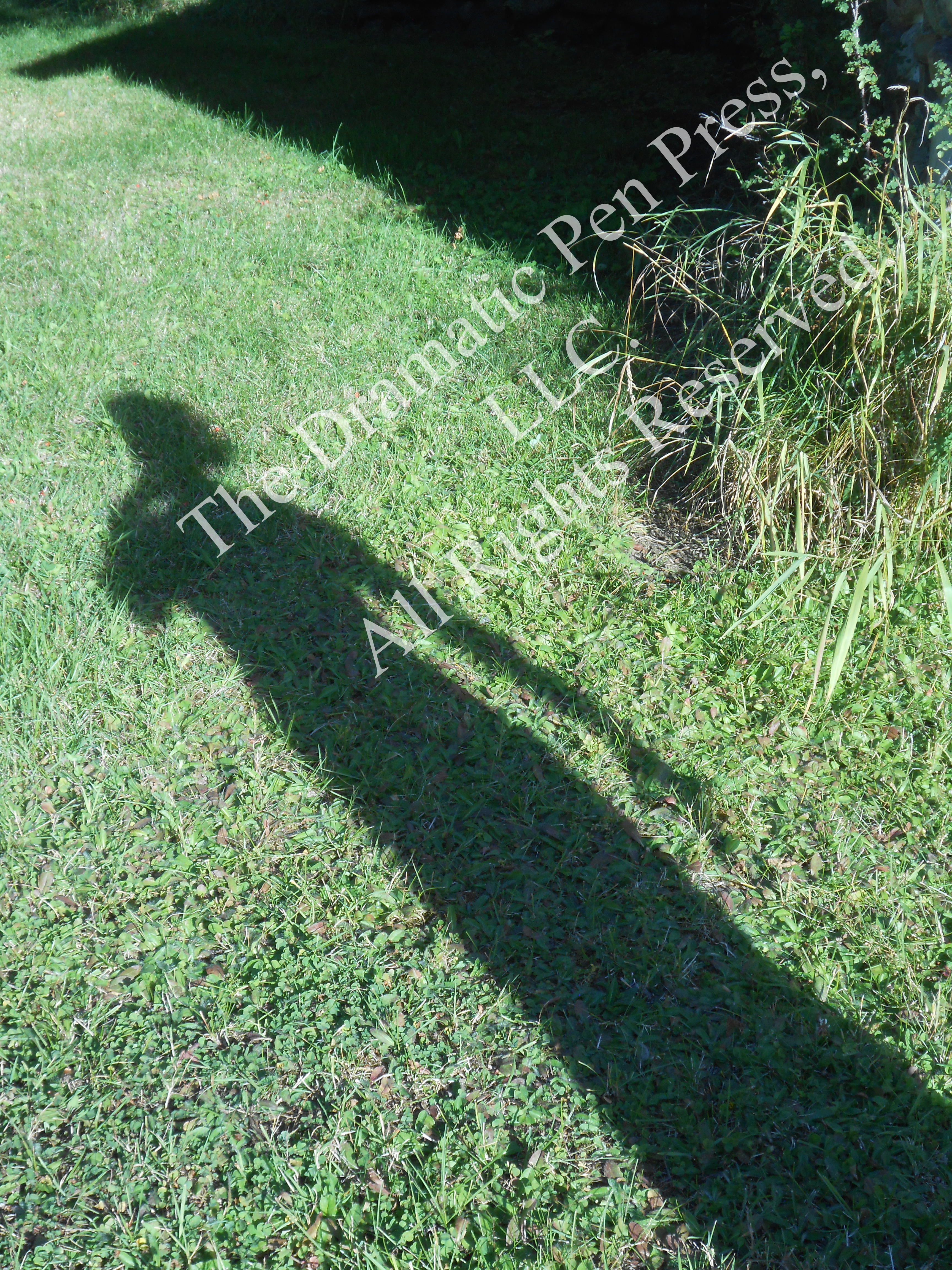Woman's Shadow on Grass