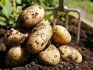patatas organicas.png