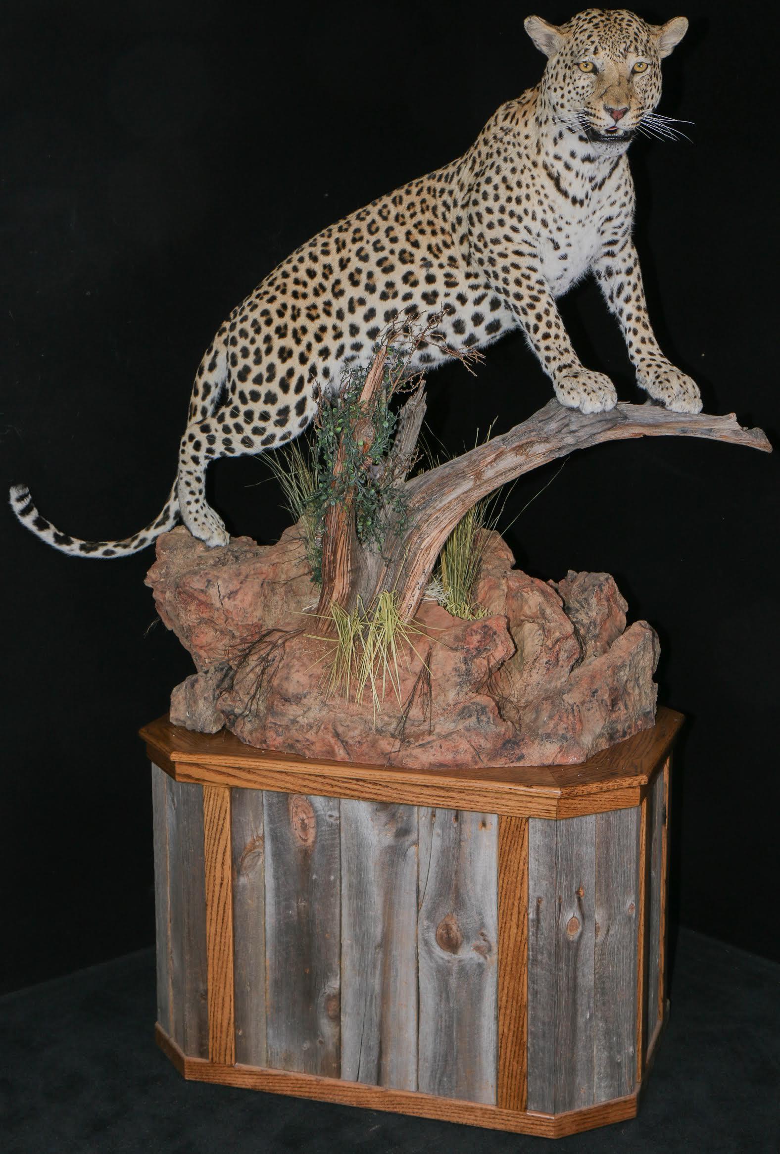 Leopard Pic 3