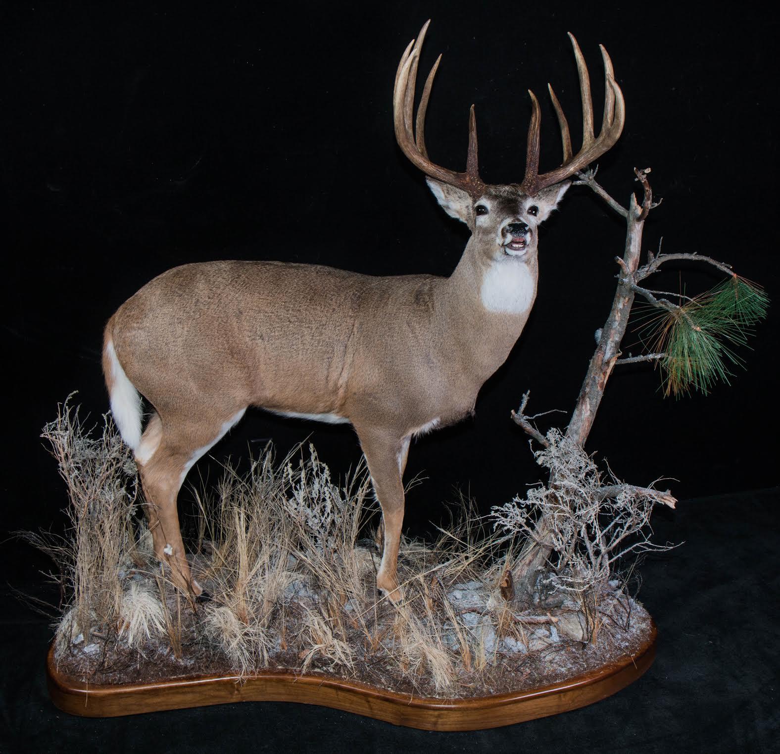 Lifesize Whitetail Deer pic 1