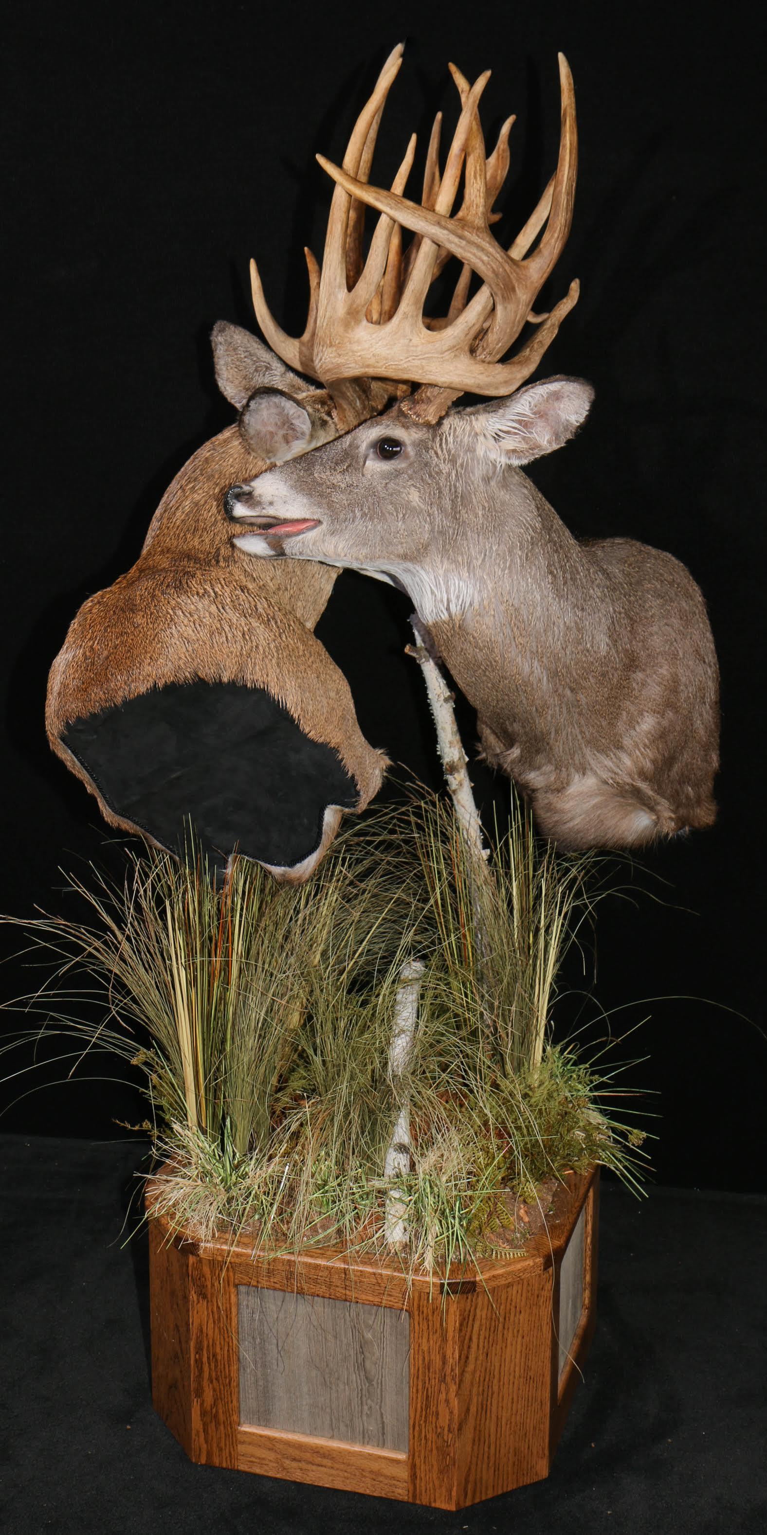 Whitetail Bucks fighting pic 1
