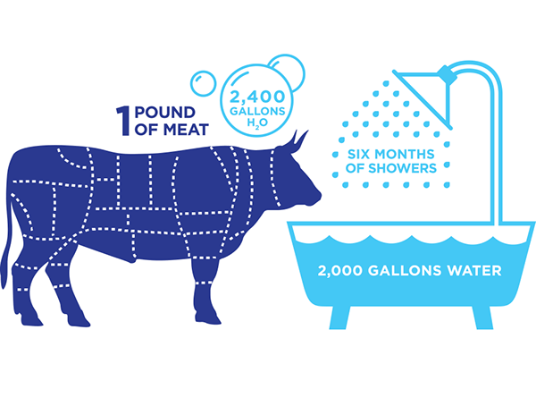 cow-water.png