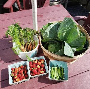 Garden Donations