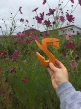 Campus Garden Wildflowers