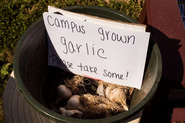 A Bowl Full of Garlic