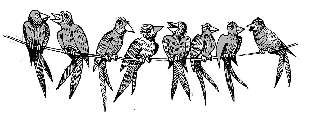birdwire.jpg
