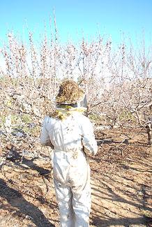 ברוך ממכוורת נגוהות לא חושש מקצת דבורים