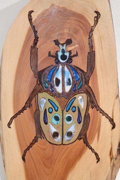 Detail, Beetle