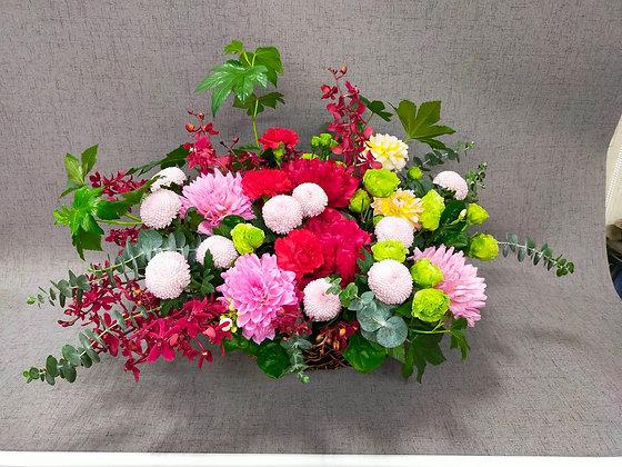 E2025-進口牡丹菊盆花