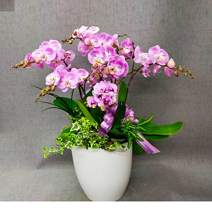 e8008桌上型蘭花