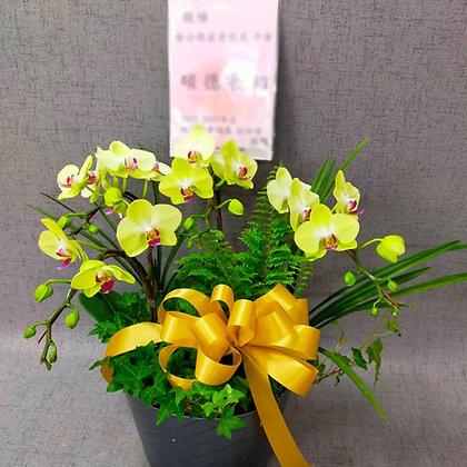 E8007桌上型追思蘭花
