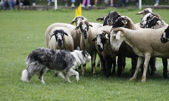 """Concurso """"Gossos de tura"""""""