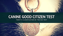 local canine good citizenship test.jpg