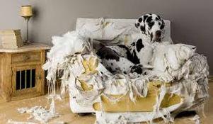 dog chewing behavior.jpg