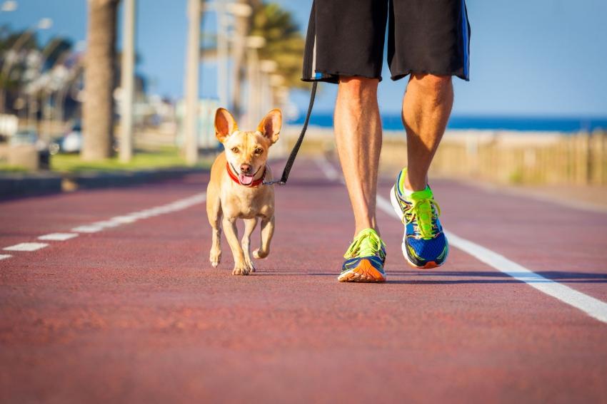 boston dog running.jpg