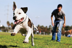 taking your dog to the dog park using our bark in the park dog park service
