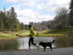dog running service arlington.jpg