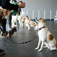 Dog Training Classes