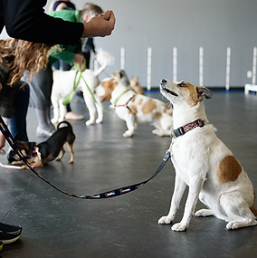 dog training in cambridge.png