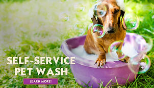 Dog self-wash dog grooming service.