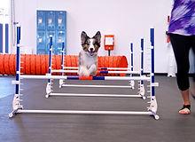 tewksbury dog training.jpg