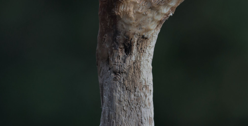 Otter Talking Stick/Shaman Wand/Spirit Animal