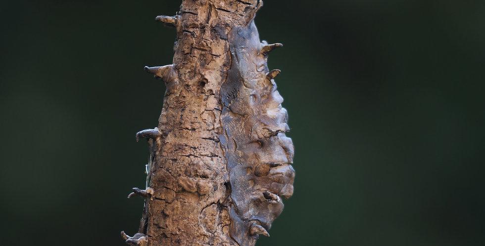 Seahorse Talking Stick/Wand/Spirit Animal