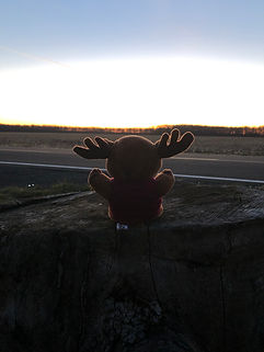 Plush Moose Sitting on Stump Facing Sunset