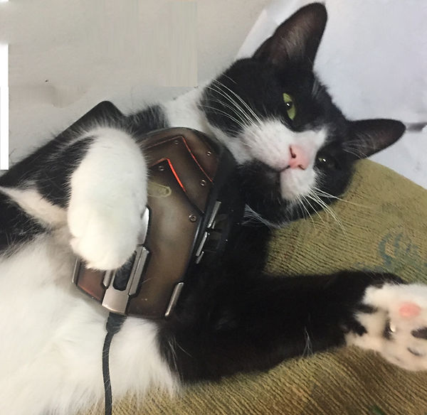 A Black and White Cat named Einstein holding a Computer Mouse.
