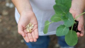 Nutrição e Conexão: a cura pelo alimento
