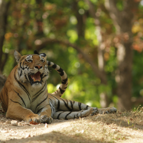 India's Wildlife Trade: Success and Failures of Protecting Endangered Species