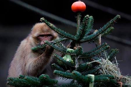 Zoo Elephants Nibble on Berlin's Leftover Christmas Trees
