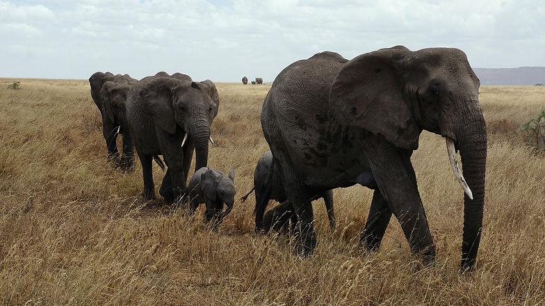 elephant-687338_1920.jpg