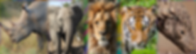 Animals banner.png