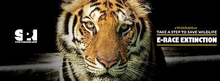 Facebook Fundriaser Tiger.jpg
