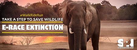 Facebook Fundriaser Elephants.jpg