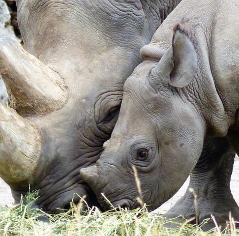Teaming up to End Wildlife Trafficking