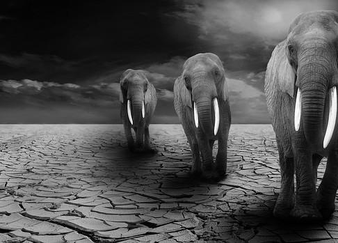 8 Ways to Keep Out an Elephant