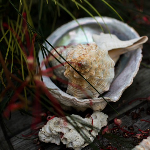 Abalone: The World's Most Expensive Seafood