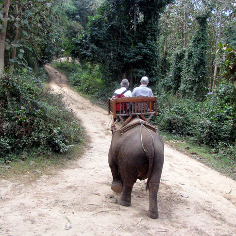 Traveling Ethically Abroad: Animal Excursions in Thailand
