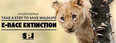 Facebook Fundriaser Lion.jpg
