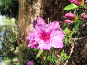 Journey: Azalea Gardens in Oklahoma