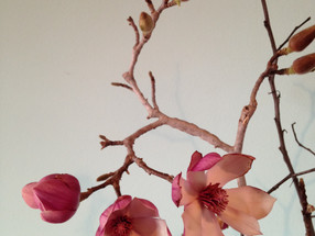 Forcing Woody Branches to Bloom