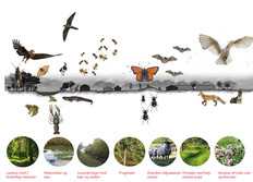 Can we enhance biodiversity by creating habitats for species and plants that use to thrive on Tuse Næs?