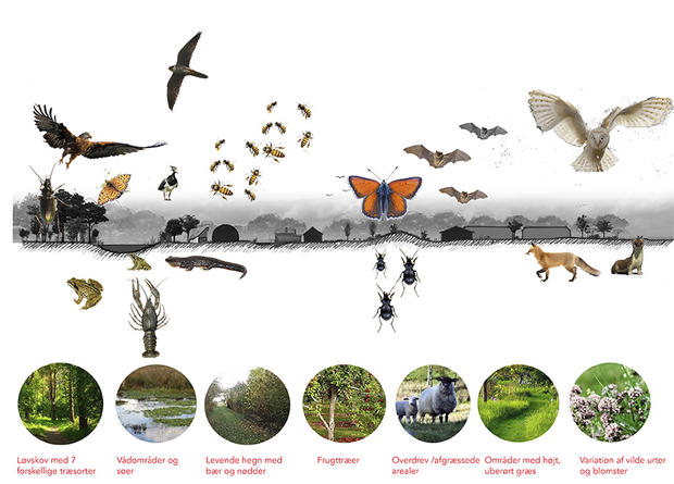 Meeting place / biotope | Photomontage by Rural Agentur