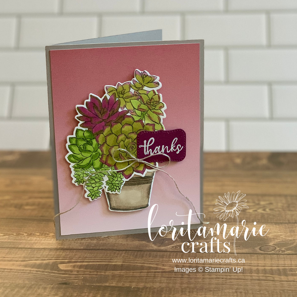 Simply Succulents Bundle Stampin' Up!