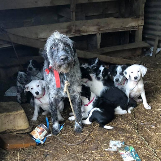 fidele and puppys 1.jpg